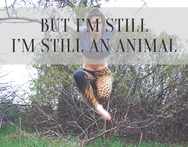 Animal, Miike Snow - still an animal