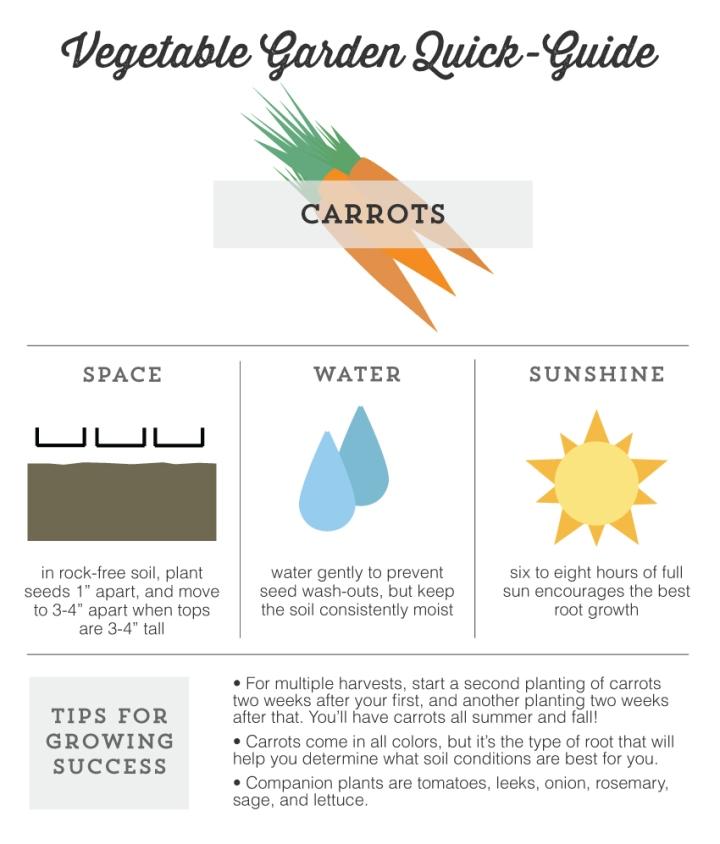 Mo Diggity Blog - Garden Quick Guide, Carrots