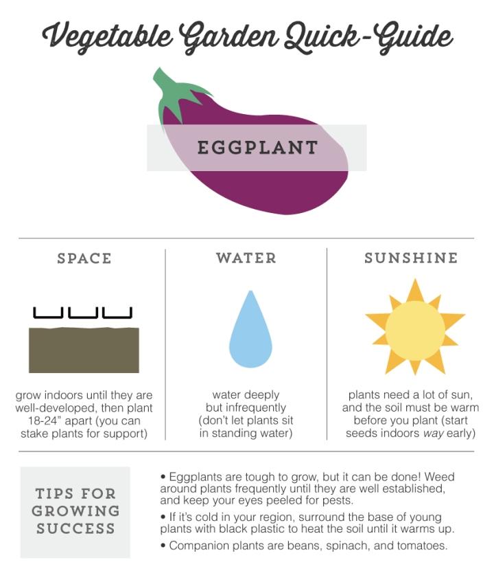 Mo Diggity Blog - Garden Quick Guide, Eggplant