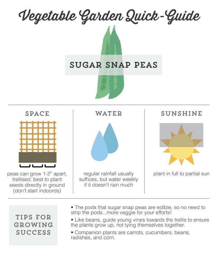 Mo Diggity Blog - Garden Quick Guide, Peas