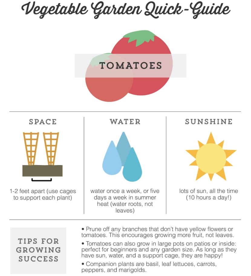 Mo Diggity Blog - Garden Quick Guide, Tomatoes