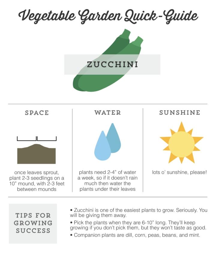 Mo Diggity Blog - Garden Quick Guide, Zucchini