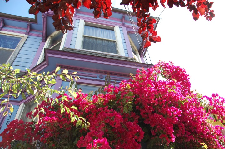Oakland, California - flowers and Victorian houses. Love the colors!