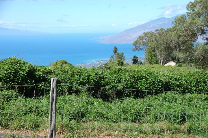 Maui Upcountry, stop on the south road to Hana: Sun Yat-Sen Park