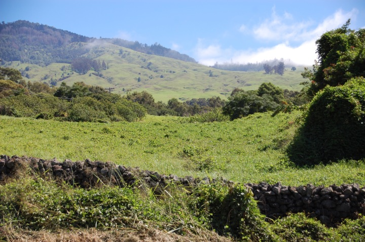 Upcountry of Maui, the south rim of the Road to Hana