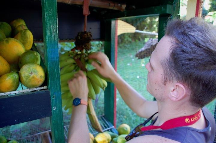 South Road to Hana - Fruit Stand near Haleakala