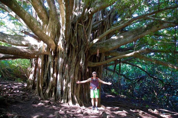 Tree on Pipiwai Trail at Haleakala National Park in Maui
