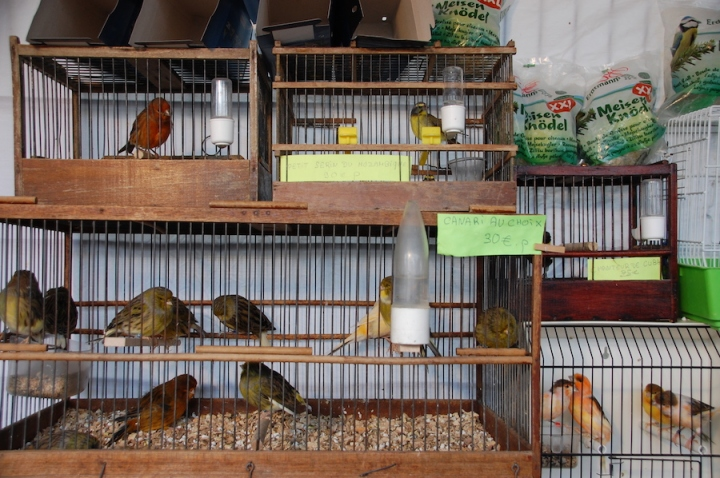 Paris bird market near Notre Dame